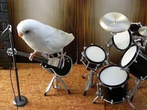 uccellino-chitarrista