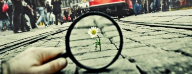 cambiamento-fiore