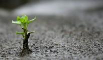 Miracolo: Germoglio dall'Asfalto
