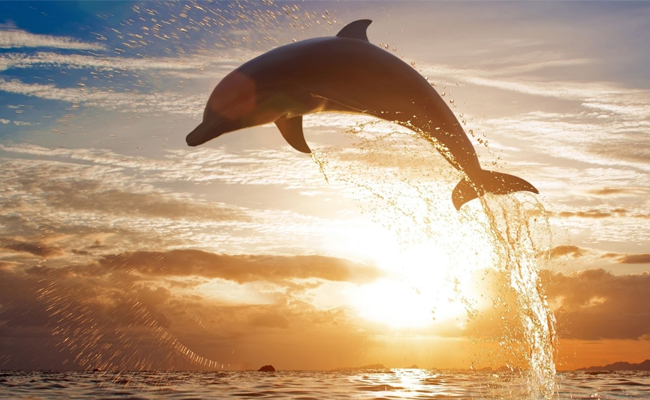 delfino-salto
