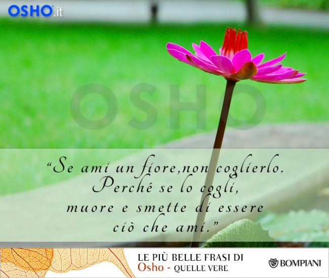 osho-fiore