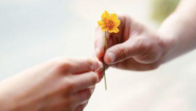 Il Counseling della Gentilezza: quanto è importante nella relazione terapeutica?